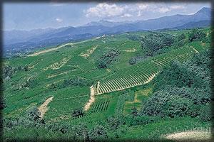 [vineyard]
